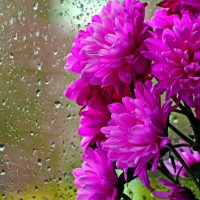 God will use the Rain to Make you Bloom